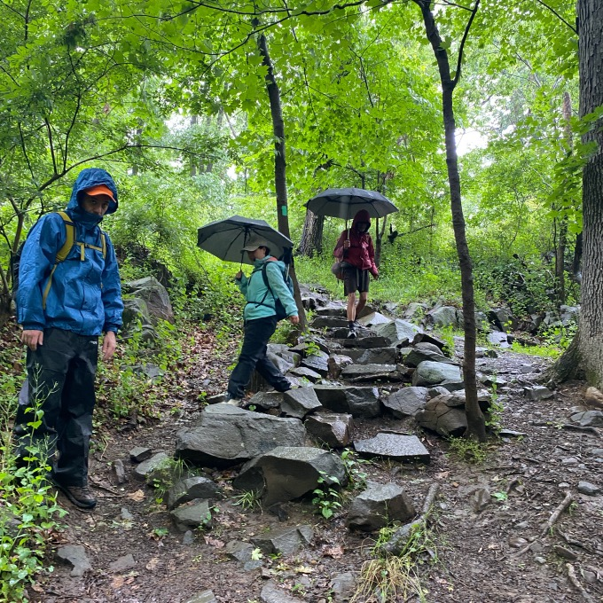 Ramblers with umbrellas descending rocky trail in woods