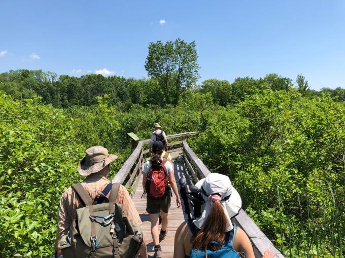 Photo of hiking group NYC on boardwalk through marsh.