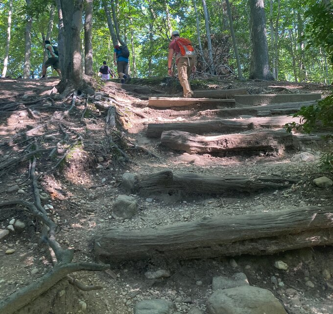 Photo of large log steps going up steep hill with hikers at top.